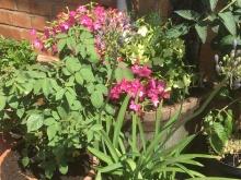 More studio flowers